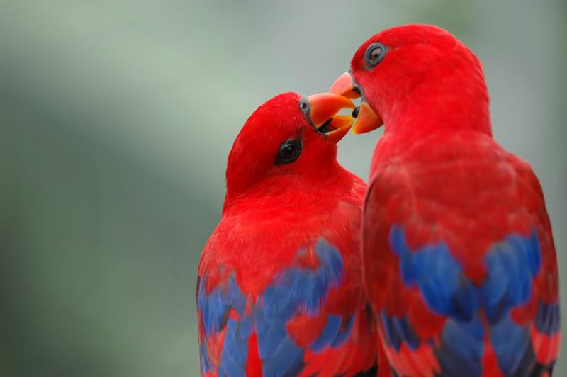 Cute-Love-Birds-HD-Wallpaper