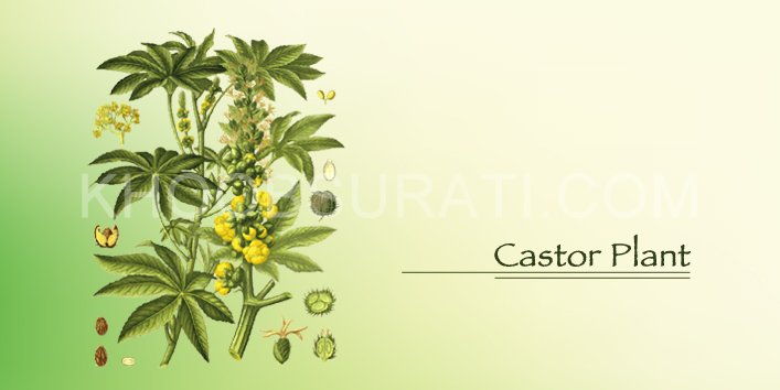 castor oil meaning in hindi