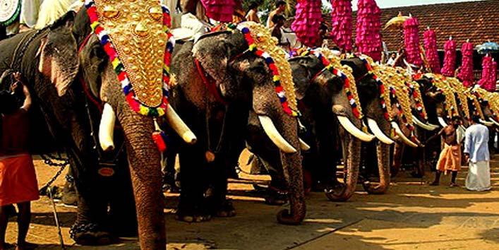 Spa-for-elephants