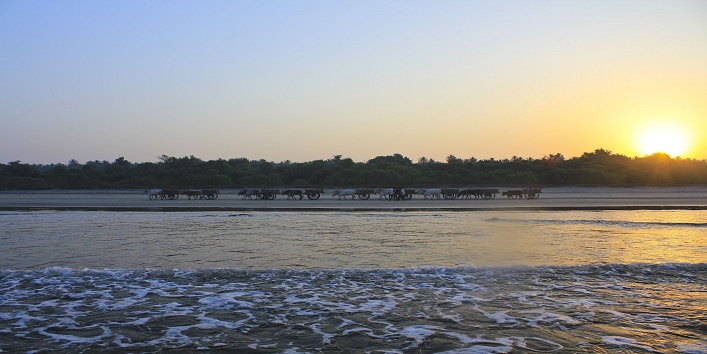 tarkarli beach in india