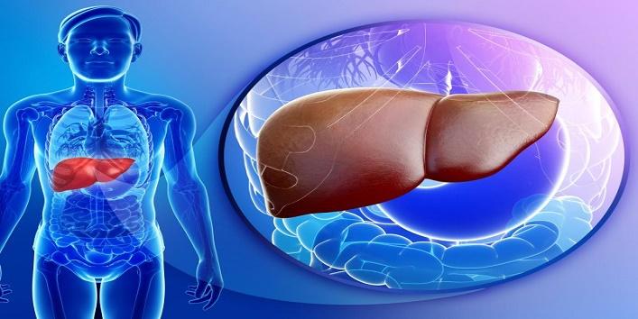 Enhances liver health