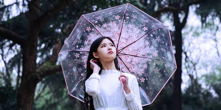 Transparent Cherry Blossom Pattern: One of the Most Sought-after Beautiful and Stylish Umbrellas for this Rainy Season