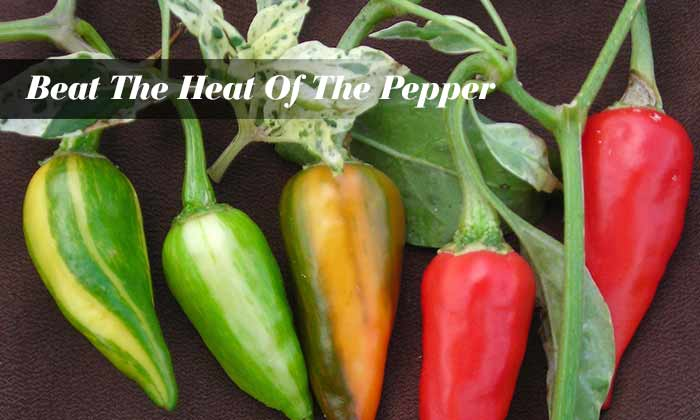 Beat The Heat Of The Pepper